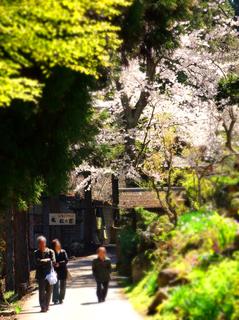 02松尾山観世音入口の桜★s.jpg