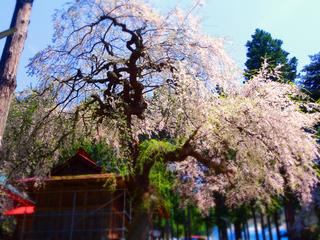 20熊野神社★.JPG