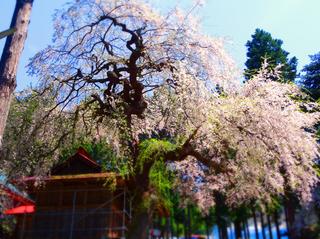 20熊野神社★s.jpg