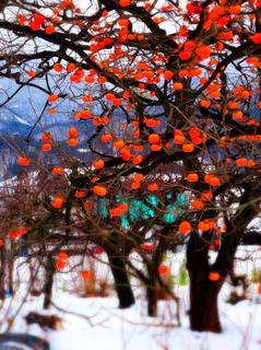 51柿の色.jpg